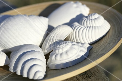 Plaster sea shells
