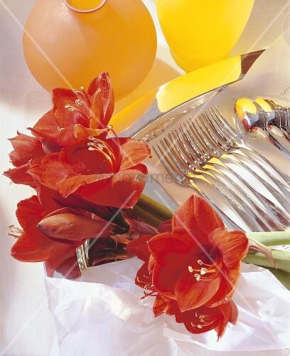 Amaryllis; Besteck; Vase