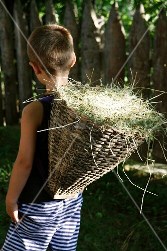 Boy carrying basket of hay in garden