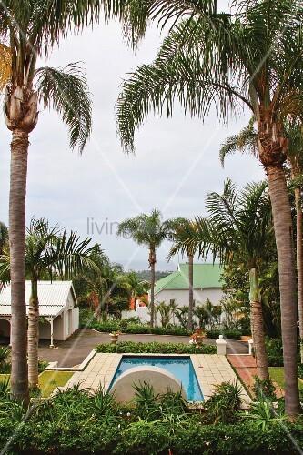 blick zwischen hochgewachsenen palmen bild kaufen. Black Bedroom Furniture Sets. Home Design Ideas