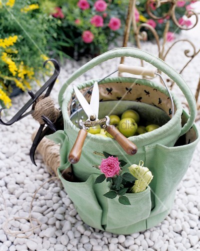 Secateurs and gardening bag filled with apples on white gravel