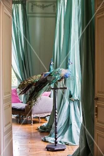 Blick durch offene Tür auf ausgestopfte Pfauen auf Metall Ständer vor Fenster mit türkisen, bodenlangen Vorhängen in herrschaftlichem Salon