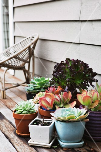 Potted succulents on wooden terrace floor and wicker chair against wooden wall