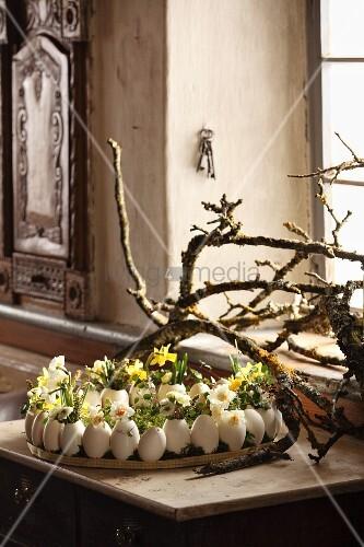 Gänseeier mit Frühlingsblumen dekoriert auf Tablett, vor Ästen auf Tisch und Fensterbank