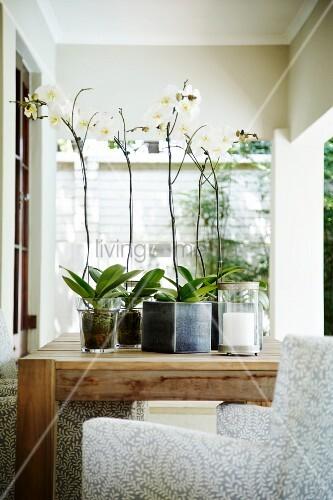 weisse orchideen im topf auf holztisch und sessel auf der. Black Bedroom Furniture Sets. Home Design Ideas