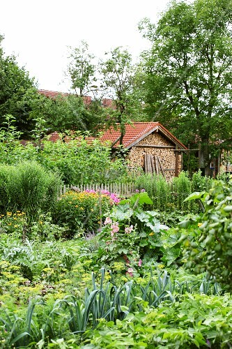 Lush cottage garden with firewood store in background