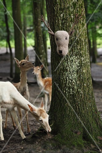 Crocheted deer head with twig antlers on tree and deer in woodland
