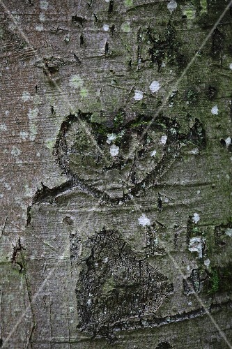 Love-heart carved in tree trunk