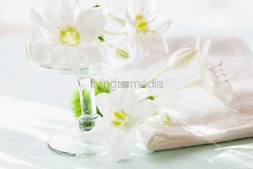 White lilies in stemmed glass bowl as table centrepiece