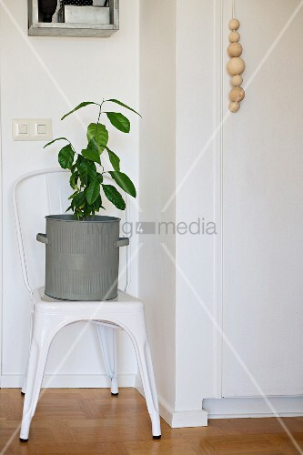 Green houseplant in zinc pot on vintage chair next to wooden balls threaded on cord as handle of cupboard door