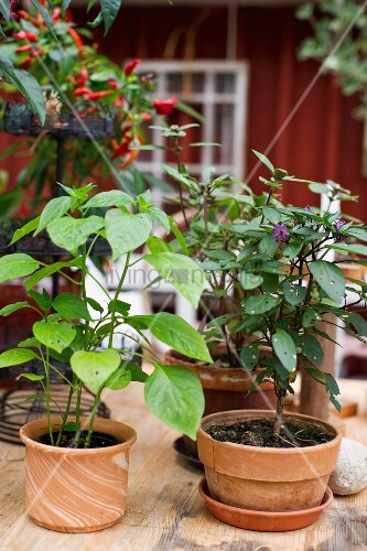 Various potted plants on wooden table