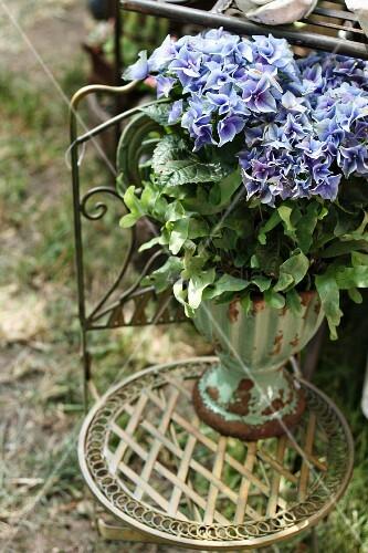 blau bl hende hortensie auf gartenstuhl aus metall bild. Black Bedroom Furniture Sets. Home Design Ideas