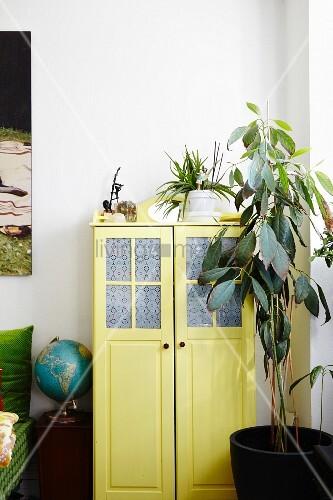 Grosse Zimmerpflanze vor gelbem Retro Schrank mit Glasfüllung