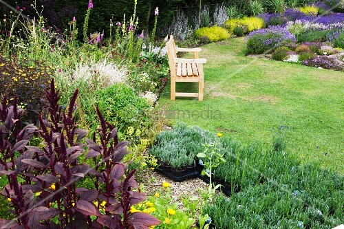 Well-tended garden with colourful flowerbed and small lavender plants in black plant pots