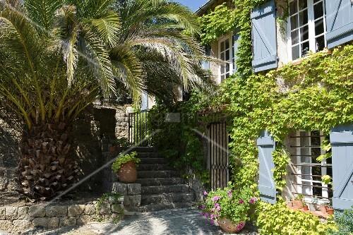 Mächtige Palme und beschattete Steinstufen vor einem weinberankten, provenzalischen Gästehaus
