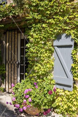Eingangsbereich eines weinberankten, mediterranen Gebäudes mit hellblauem Fensterladen und schmiedeeisernem Gitter vor der Tür