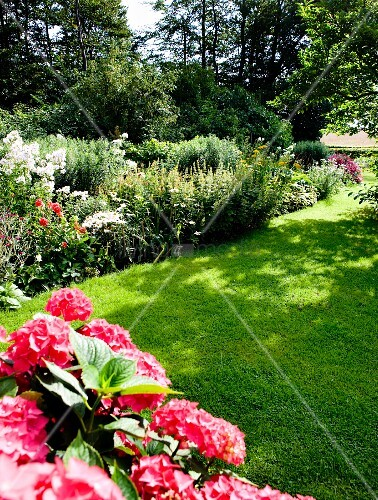 Rosa Hortensien und blühende Blumen in sommerlichem Garten mit gemähtem Rasen