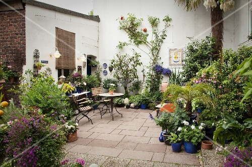 Courtyard with various plants in blue-glazed ceramic pots and bistro table and chairs in background