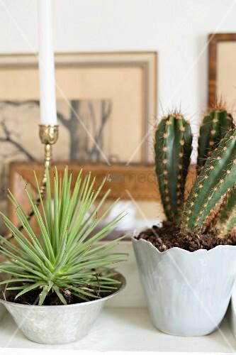 Sukkulente in Silberschale und Kaktus in hellgrau glänzendem Porzellantopf
