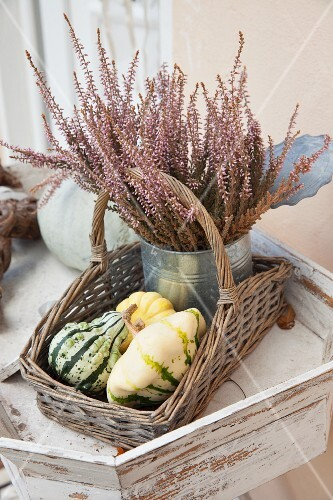 Various pumpkins and metal can of heather in wicker trug on tray table