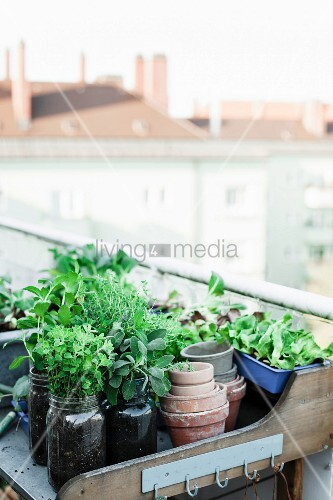 Fresh herbs in mason jars on potting bench on roof terrace
