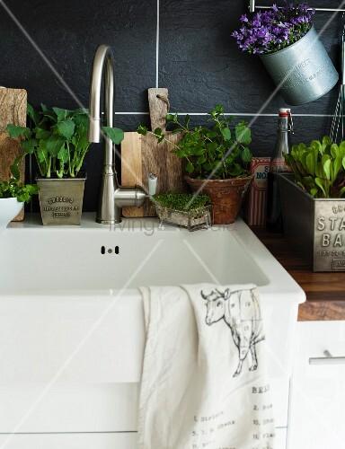 Spülbecken in der Küche dekoriert mit verschiedenen Pflanzen in Töpfen