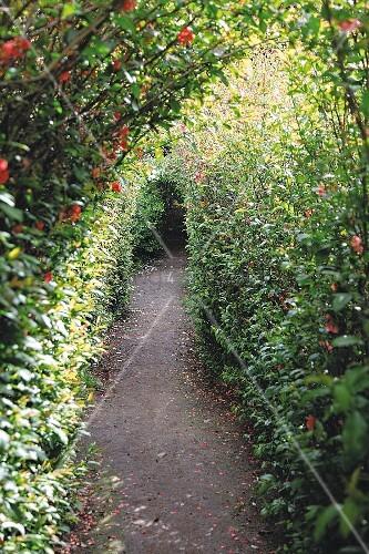 Narrow path in densely planted garden