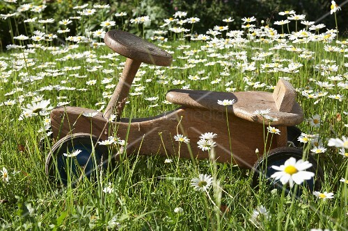 Rustic wooden ride-on trike amongst ox-eye daisies in summer meadow