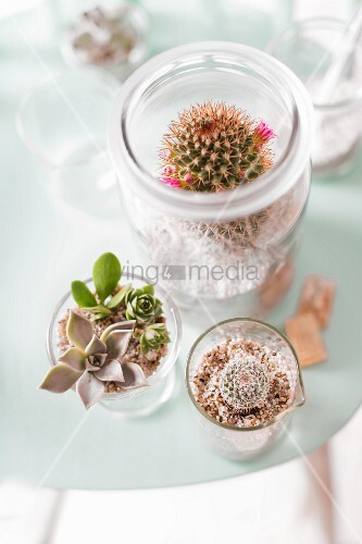 Various cacti in terrariums made from glass jars