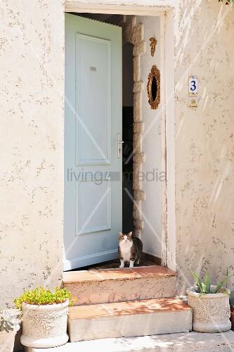 Cat standing in open front door