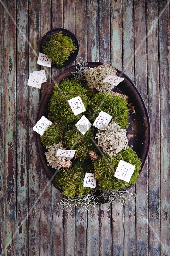 A moss nest as an advent calendar