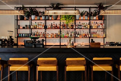 Bar with upholstered barstools at dark counter and illuminated shelves of spirits and house plants on wall
