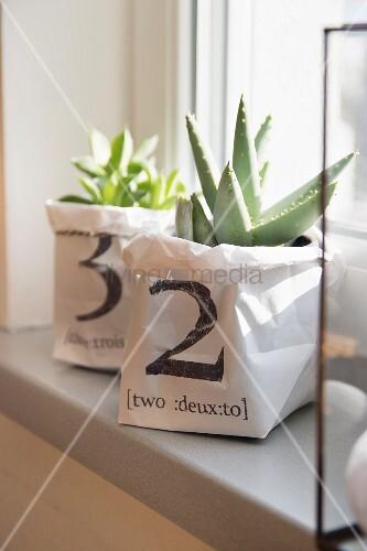 Sukkulenten in selbstgefertigten, bedruckten Papiertüten