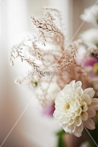 White dahlia against blurred background