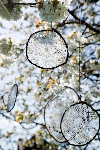 Upcycling: granny's doilies hung from blossoming cherry tree as dream catchers