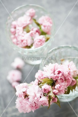 Glass bowls of Japanese cherry blossom