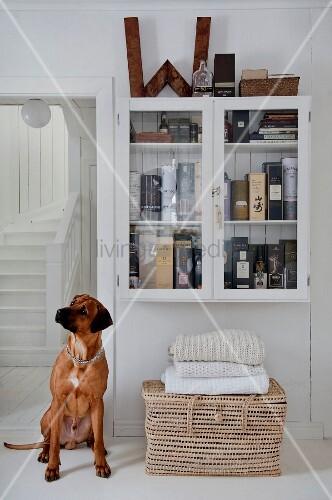 Ein Hund sitzt vor einem Wandschrank mit Whiskey-Sammlung