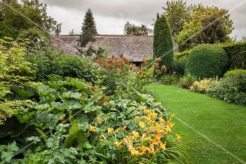 Day lilies and foliage plants next to lawn in summer garden with overcast sky
