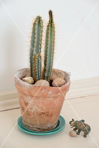 Cactus and pebbles in vintage terracotta pot and elephant figurine on floor