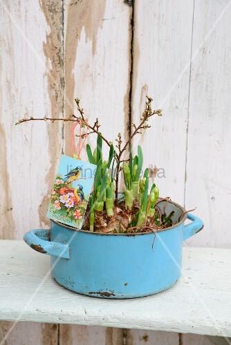 Nostalgischer hellblauer Kochtopf mit knospenden Hyazinthenzwiebeln bepflanzt und mit Ostergrußkarte