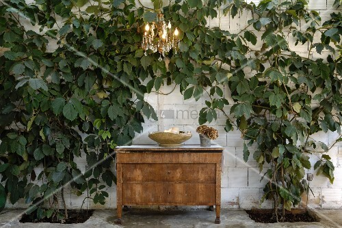 Vintage wooden chest of drawers below chandelier against limestone wall covered in climbing plant