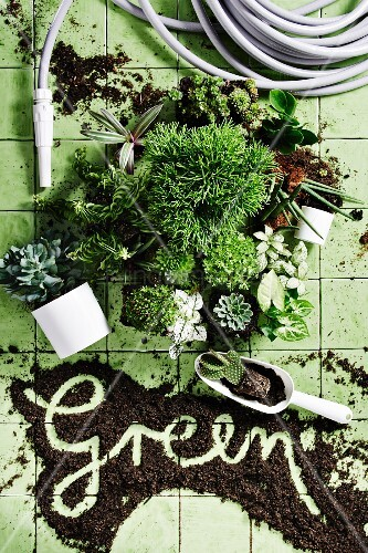 Garden hose, various green pants and the word 'Green' written in potting compost