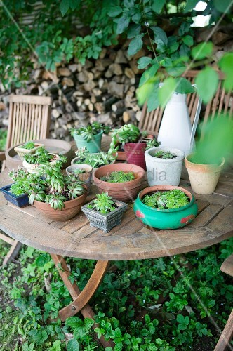 Succulents in various planters on rustic garden table