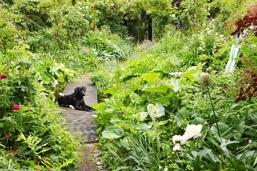 Dog lying on path in lush summer garden