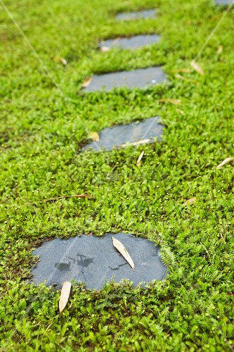 Stepping stones amongst moss