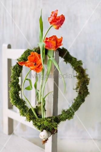 Drei Tulpen mit Zwiebeln in einem Mooskranz an der Stuhllehne