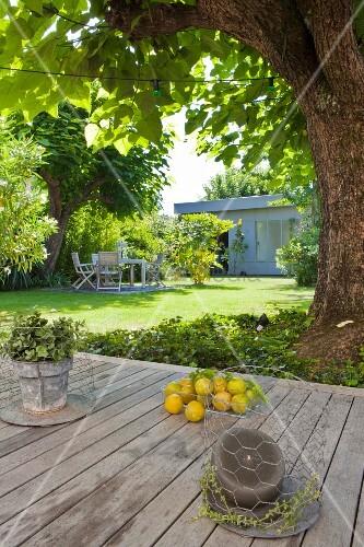 View across table to shady seating area below tree