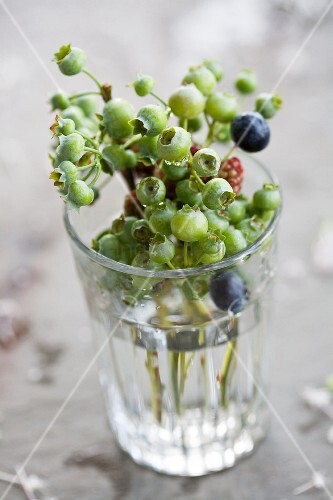 Unripe blueberries in water glass