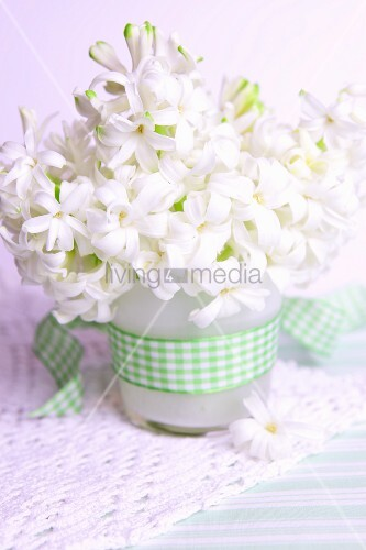 Posy of white hyacinths in vase with checked ribbon
