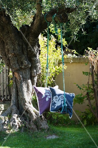 Cushions on swing hanging from old olive tree
